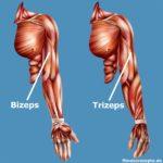 Bizeps Trizeps