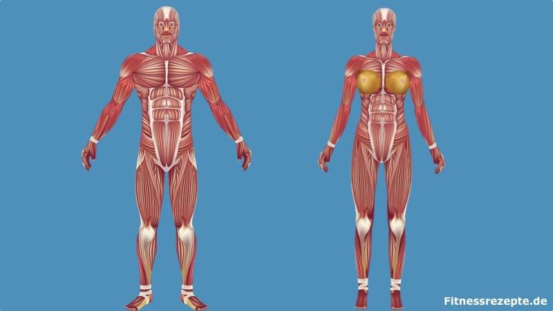 Muskeln Körper Übersicht Lexikon Muskel-Lexikon