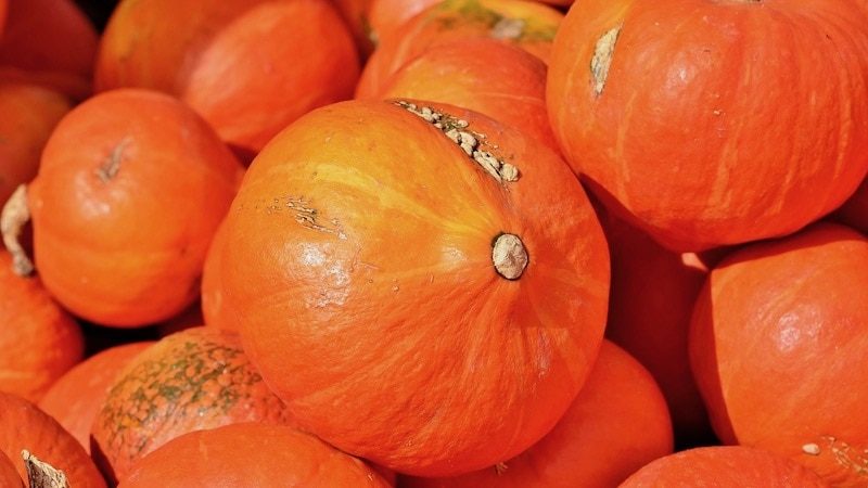Kürbis, Herbst, Ernährung