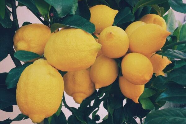 Zitrone, Zitronen
