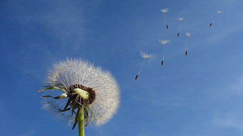 pollenzeit Alllergiker Tipps
